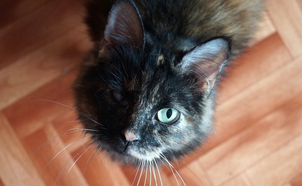 В Туле волонтеры спасли 30 кошек из квартиры пенсионерки