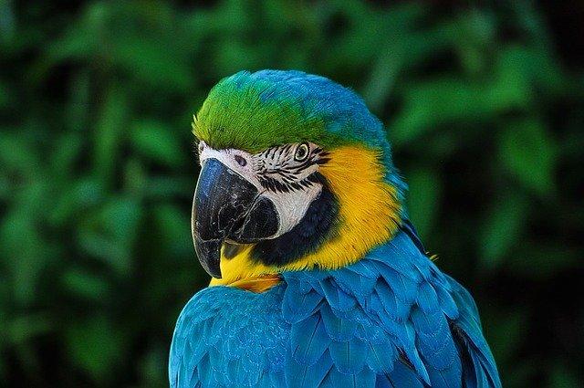 В США говорящий попугай спас хозяев от пожара