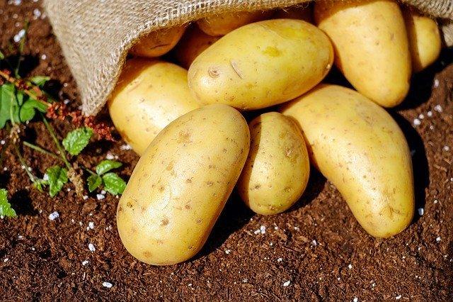 В Коми малоимущим гражданам выделят землю для посадки картофеля