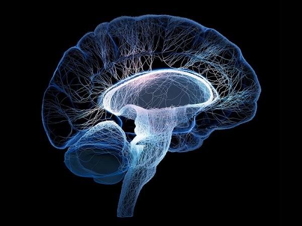 Как мозг может