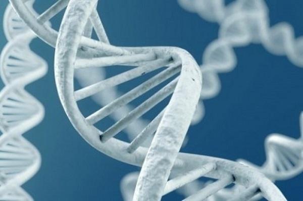 В Китае родились первые генетически модифицированные близнецы
