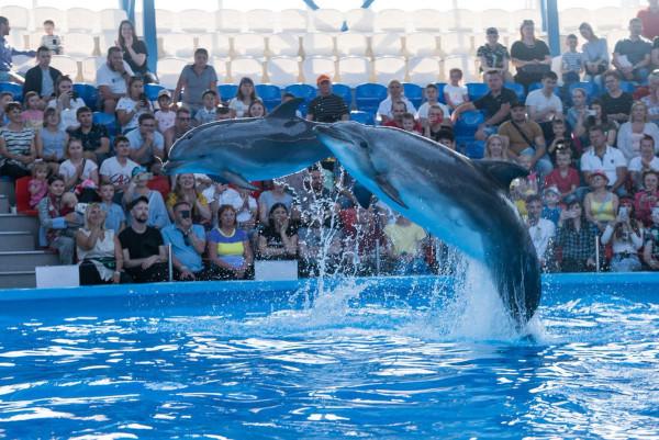 В сочинском дельфинарии белуха укусила за ногу 11-летнего ребёнка