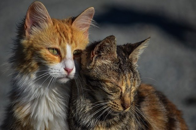 По петербургским улицам бродят более 100 тысяч бездомных кошек