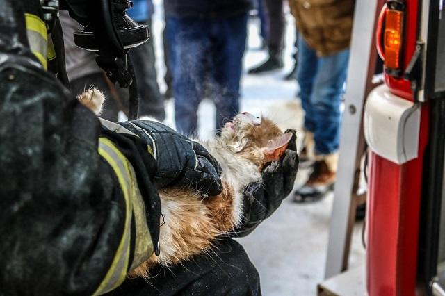 Сотрудники МЧС в Петербурге спасли кошку и собаку из затопленной кипятком квартиры