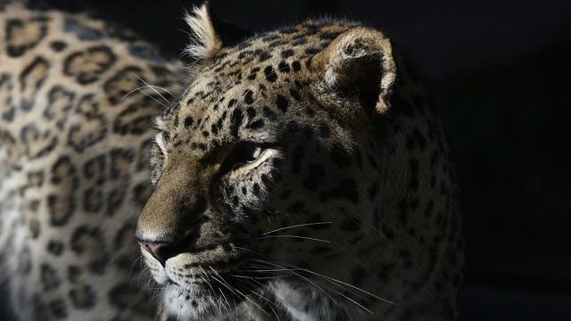 Екатерина Андреева возмущена убийством леопарда