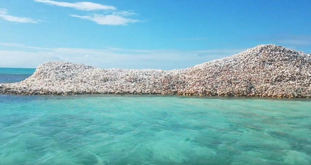 Рыбаки за 800 лет построили остров из раковин