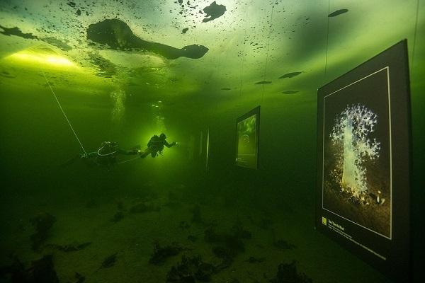 Уникальная фотовыставка открылась подо льдом Белого моря