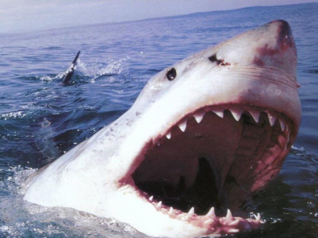 103 года самым громким нападениям акул в Нью-Джерси
