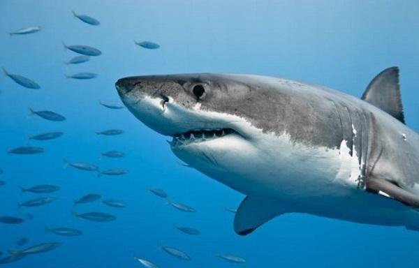В Австралии акула напала на рыбака