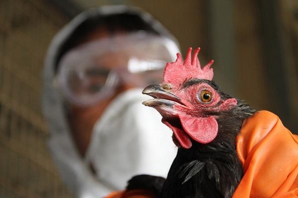 Житель Китая заразился птичьим гриппом