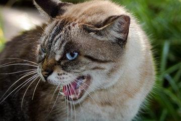 На Украине кот задушил девятимесячного ребенка