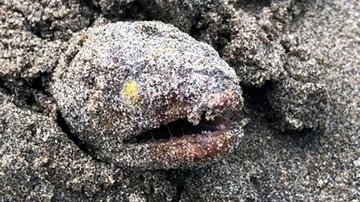 На пляже в Лонг-Бич нашли редкую рыбу