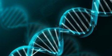 За благосостояние отвечают 24 гена