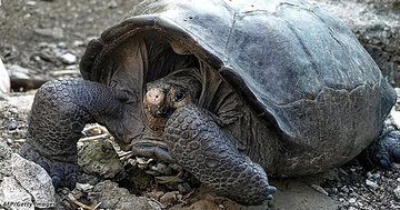 Ученые нашли черепаху, которой не должно быть