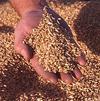 Япония скупит российское зерно