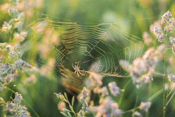 Жителей Великобритании атаковали пауки