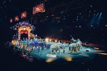 Во Франции введут запрет на использование диких животных в цирках